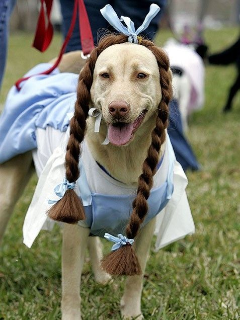 Dorothy From The Wizard Of Oz Great Dog Costume Dogs Dog