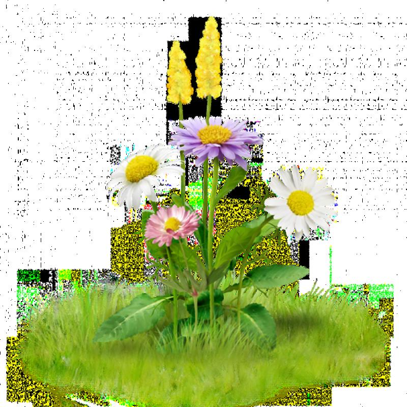 Класс, полевые цветы картинки на прозрачном фоне