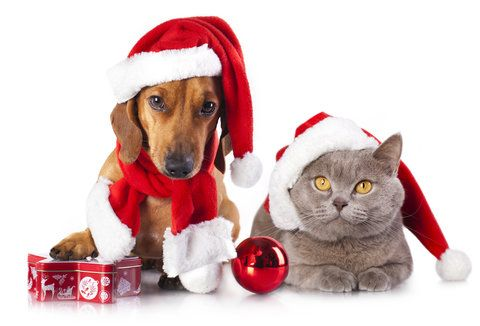 Thw rost gifts you can get your pet from Petplan pet insurance.