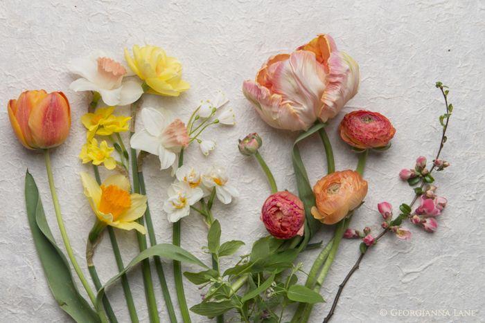 Narcissus, tulip, ranunculus, leucojum, flowering quince and akebia vine