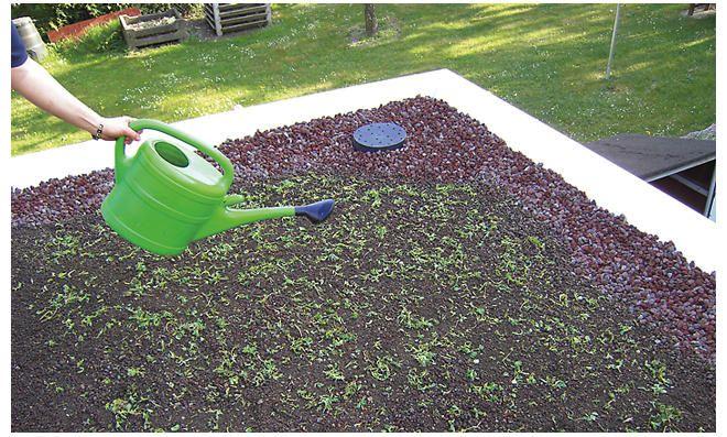 Dachbegrünung pflanzen in 2020 Dachbegrünung, Garage