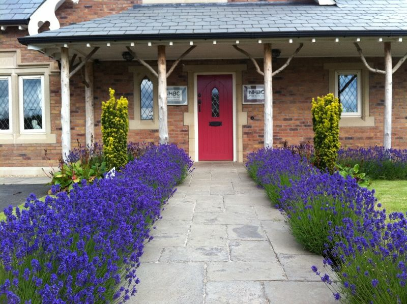 Lavandula angustifolia 'Hidcote' bordering the path leading to the front door of the Gingerbread cottage at Ballantine Garden Village Lisburn. Landscaping carried out by Nature at Work