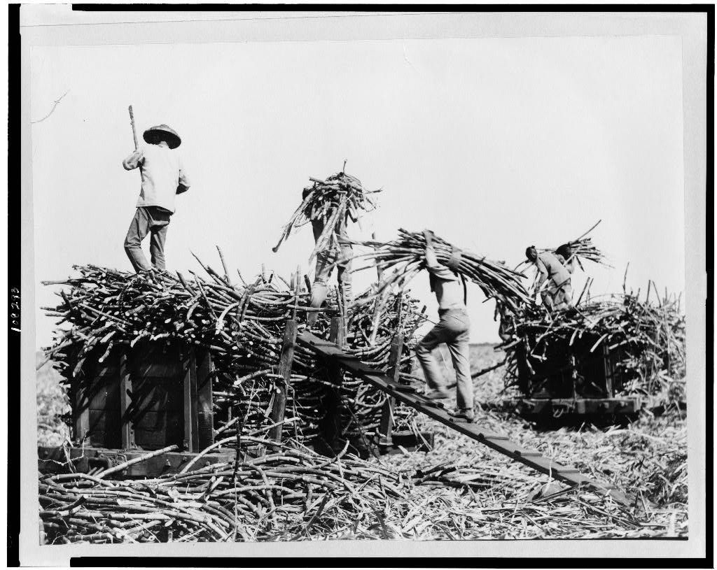 Loading sugar cane in Hawaii, 1917 (Library of Congress