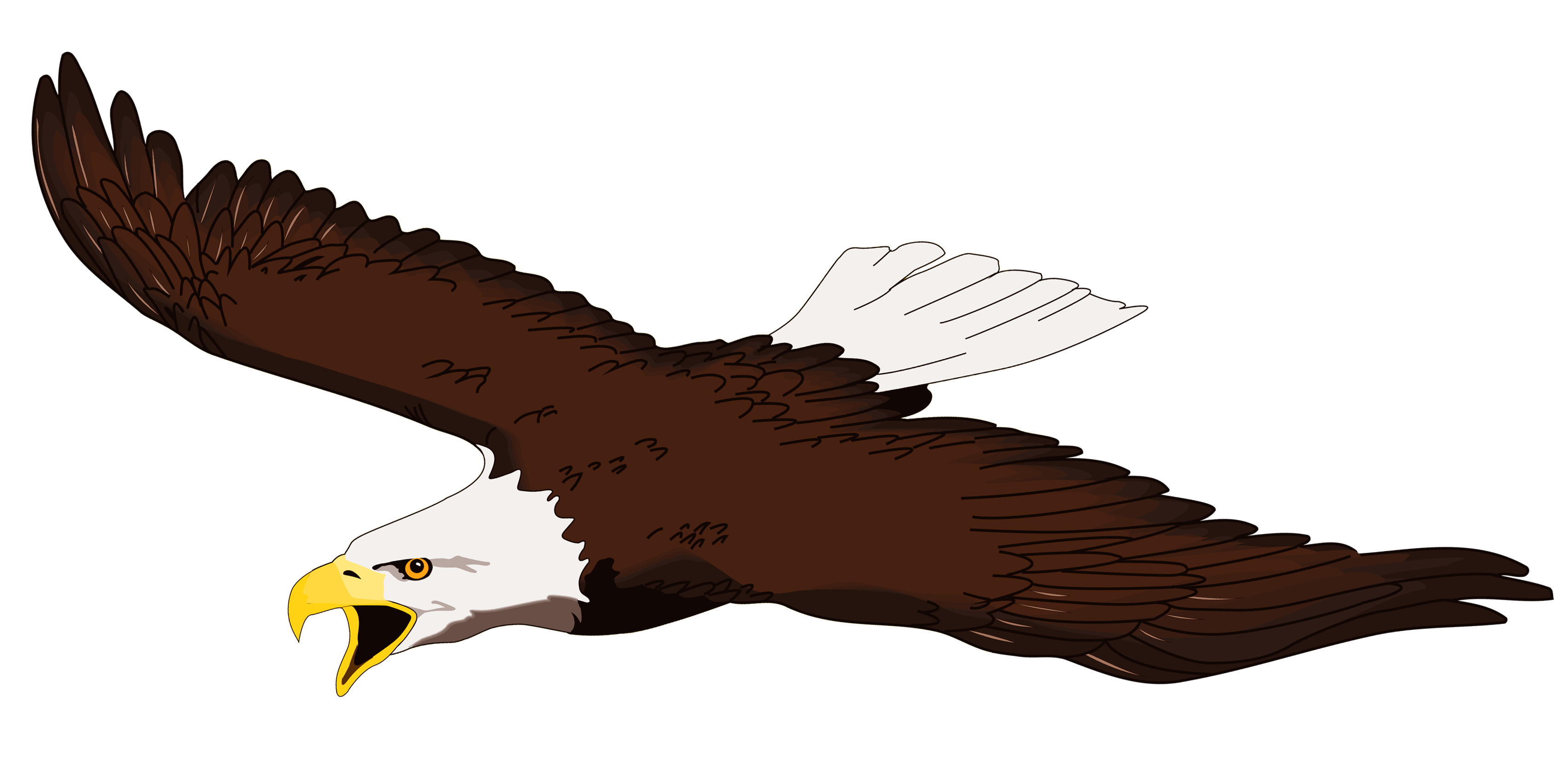 Eagle soaring. Images for clip art