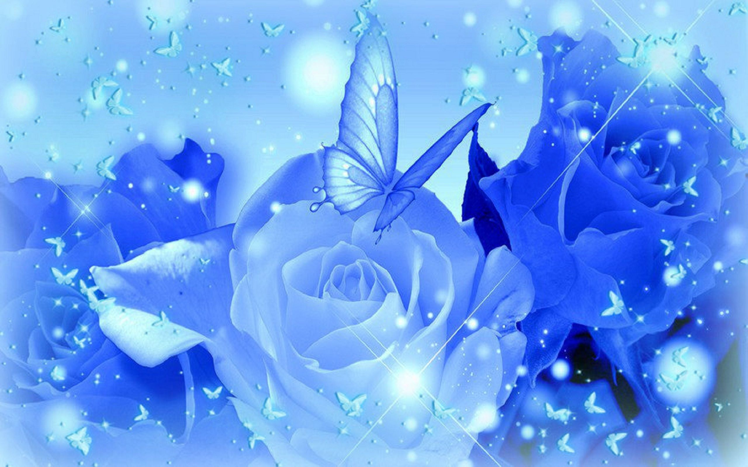 White And Blue Roses Wallpaper Photo With High Resolution