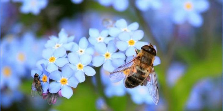 How to get rid of bees home remedies bee friendly plants
