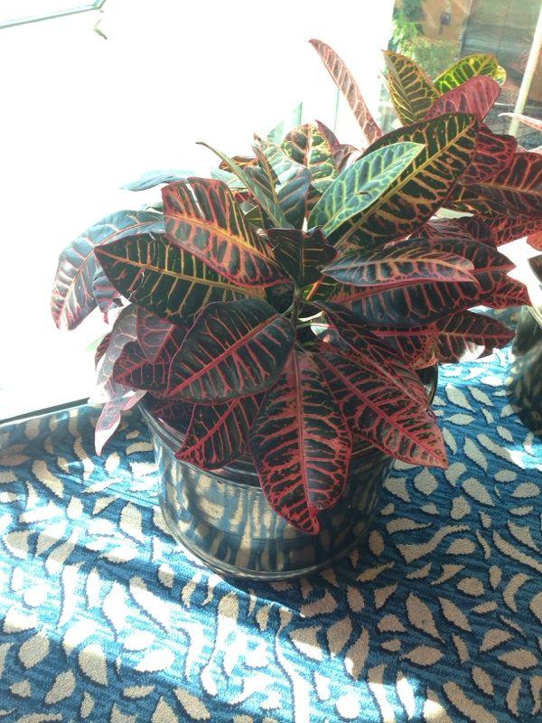 Free Plant Identification House plants, Plants, Garden