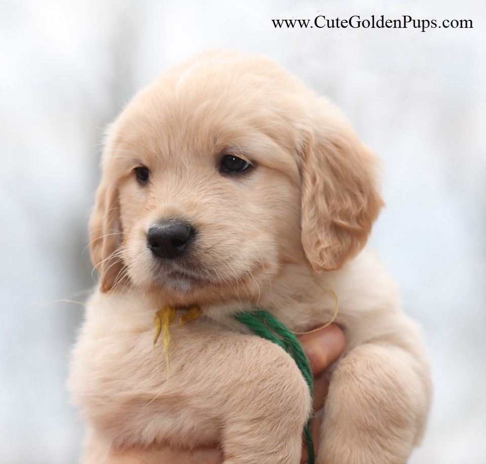 Pin By Ohsosplendid On Cuteness Kittens And Puppies Puppies