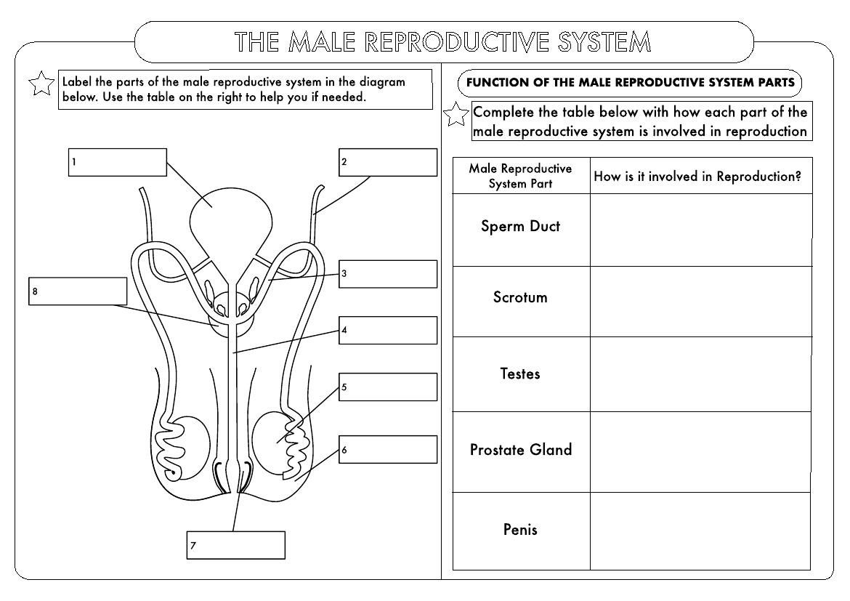 Huge Gcse Biology Worksheet Pack By Beckystoke