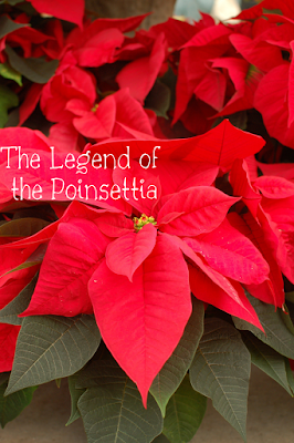 Niecyisms Creative Learning Center The Legend Of The Poinsettia Poinsettia Plant Christmas Plants Most Beautiful Flowers