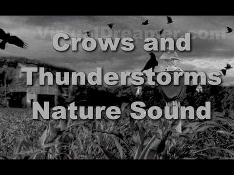 Crows in the Cornfield : Thunderstorm and Rain - 30 Minutes