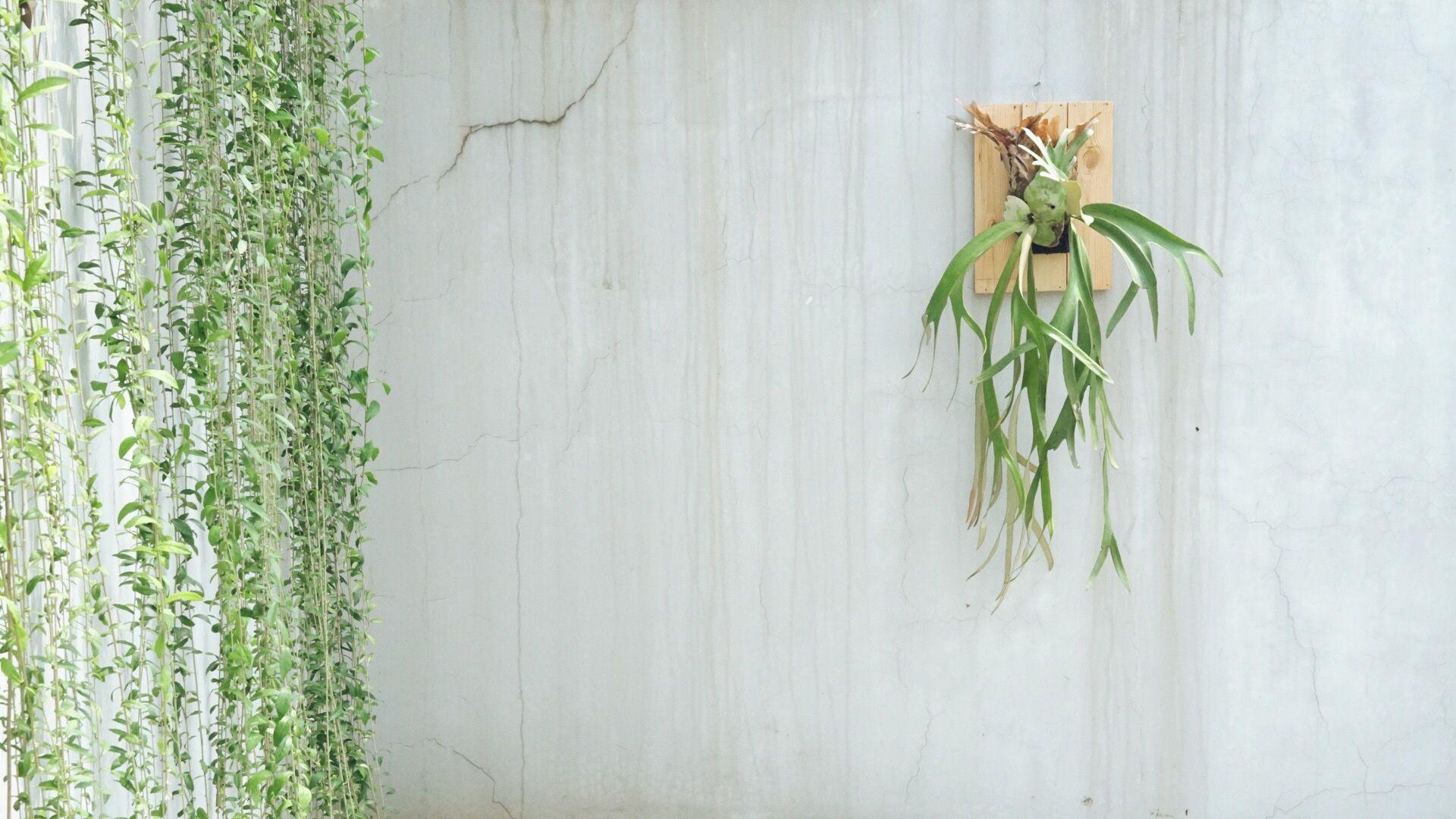 Tanaman Hias Untuk Teras Rumah Outdoor Plants Tanaman Wadah Tanaman Balkon Kecil