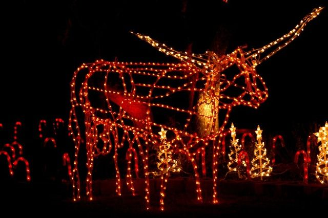 I am so tempted to order a light up Bevo for my front yard this Christmas.  Not sure if Californians would get it though. :( Hook 'em! - I Am So Tempted To Order A Light Up Bevo For My Front Yard This