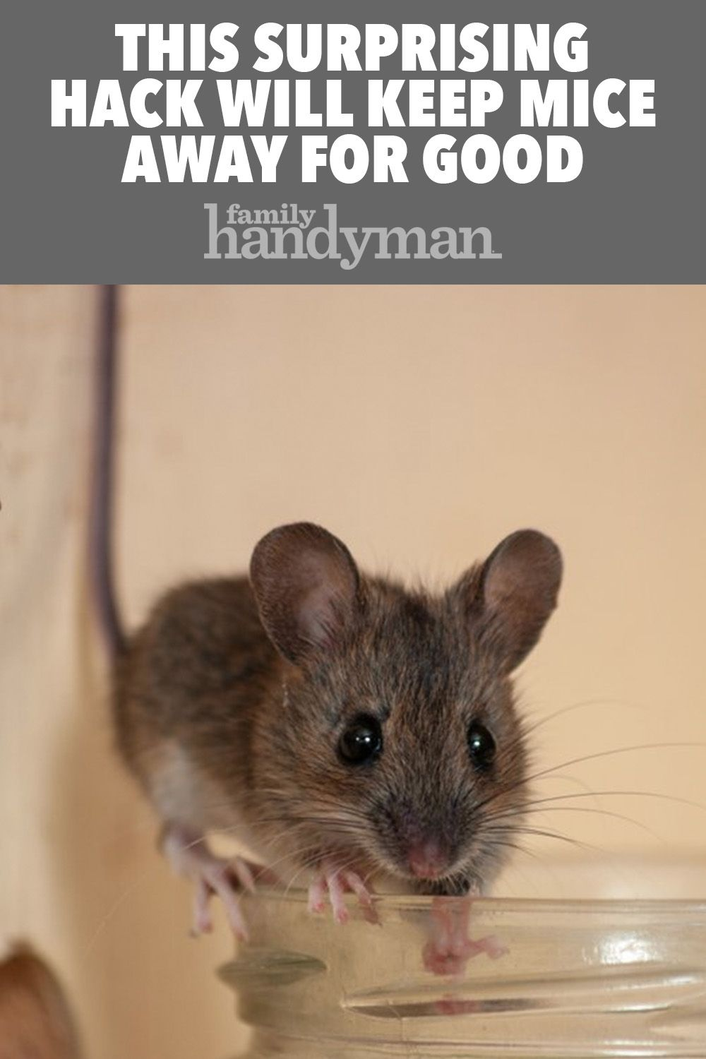 This Surprising Hack Will Keep Mice Away For Good Keep Mice Away Getting Rid Of Mice Mice Repellent