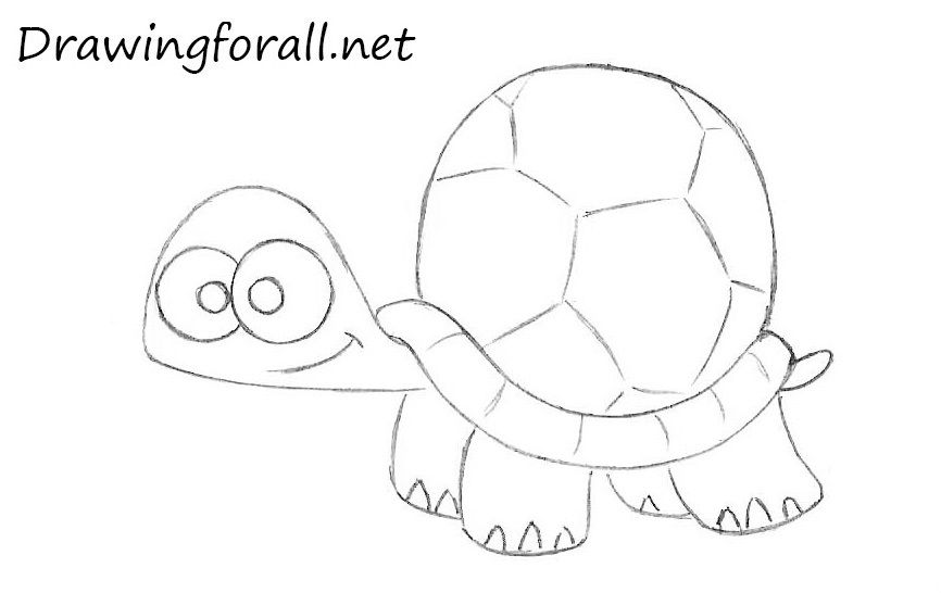 How To Draw A Cartoon Turtle Turtle Drawing Cartoon Turtle