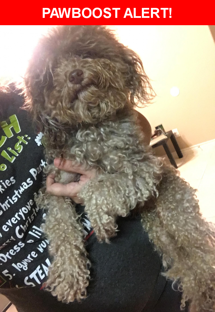 Is this your lost pet? Found in Laredo, TX 78045. Please spread the word so we can find the owner!