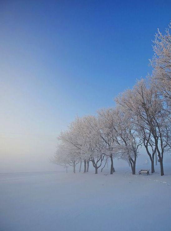 snowy-trees-alberta-canada