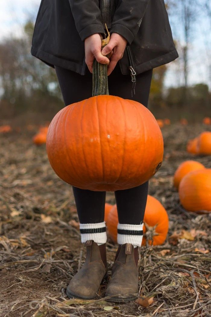 Pin By Madison S On My Style In 2020 Best Pumpkin Patches Pumpkin Patch Pictures Pumpkin