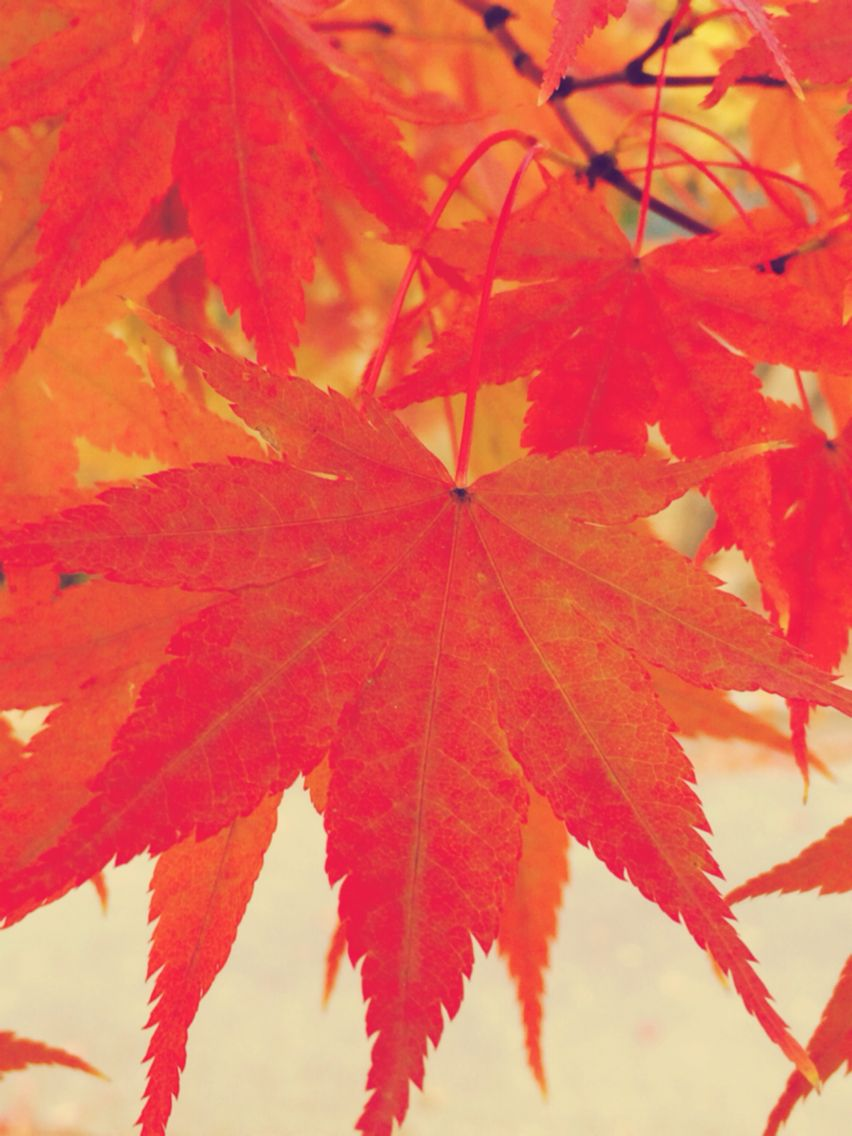 단풍   autumn