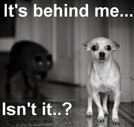 Spay And Neuter Early A Humane Alliance Campaign When To Spay Funny Dog Pictures Funny Dogs Cute Funny Animals