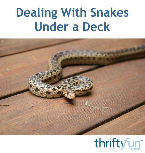 Dealing With Snakes Under A Deck Snake Under Decks Deck