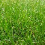 Hortensien durch Stecklinge vermehren - gewusst wie! - Gartenzeitung.com-#durch #Gartenzeitungcom #gewusst #Hortensien #Stecklinge #vermehren #wie #hortensienvermehren Hortensien durch Stecklinge vermehren - gewusst wie! - Gartenzeitung.com-#durch #Gartenzeitungcom #gewusst #Hortensien #Stecklinge #vermehren #wie #hortensienvermehren Hortensien durch Stecklinge vermehren - gewusst wie! - Gartenzeitung.com-#durch #Gartenzeitungcom #gewusst #Hortensien #Stecklinge #vermehren #wie #hortensienvermeh #hortensienvermehren