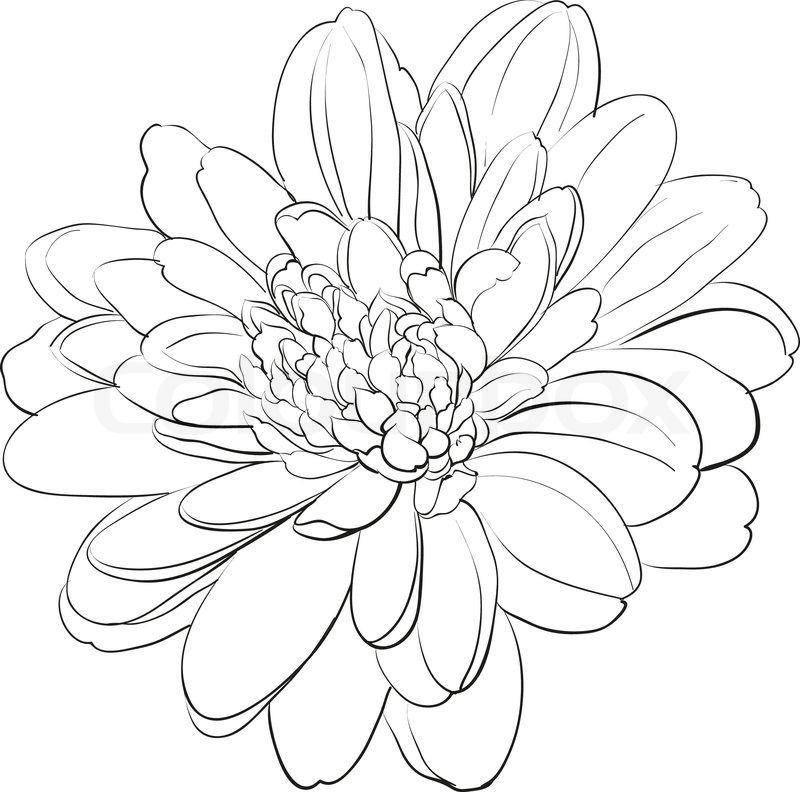 Pin By My Info On Fall 2017 Chrysanthemum Drawing Flower Drawing Chrysanthemum Tattoo