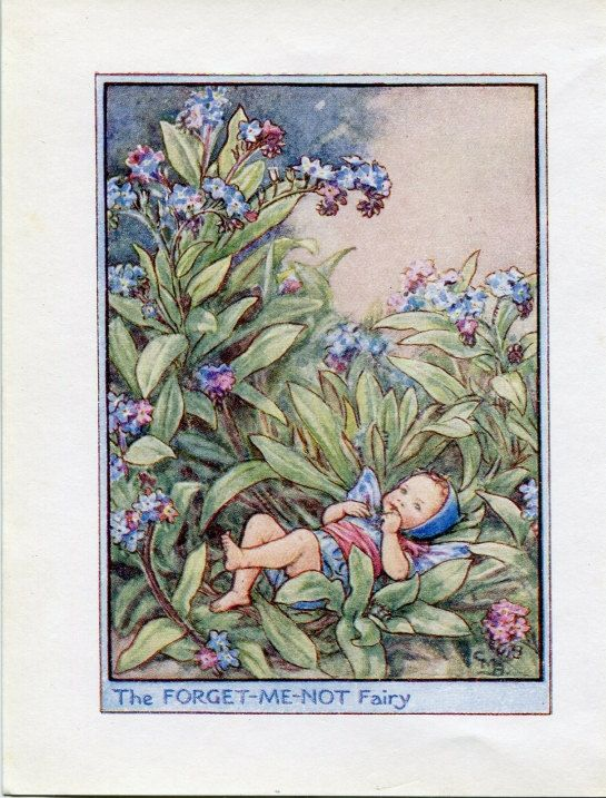 Forget-Me-Not Flower Fairy Vintage Print by FlowerFairyPrints