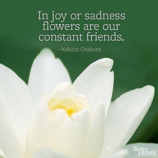 Flower Quotes Flower Quotes Short Flower Quotes Garden Quotes