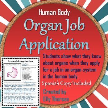 Human Body Organ Job Application Assignment in English and Spanish - job application