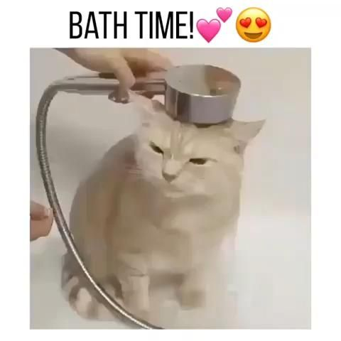cat bath time😹😻follow me on youtube for more cute
