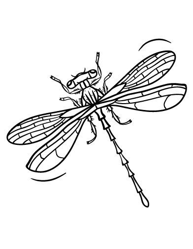 Dragonfly Coloring Pages Insect Coloring Pages Insect Coloring