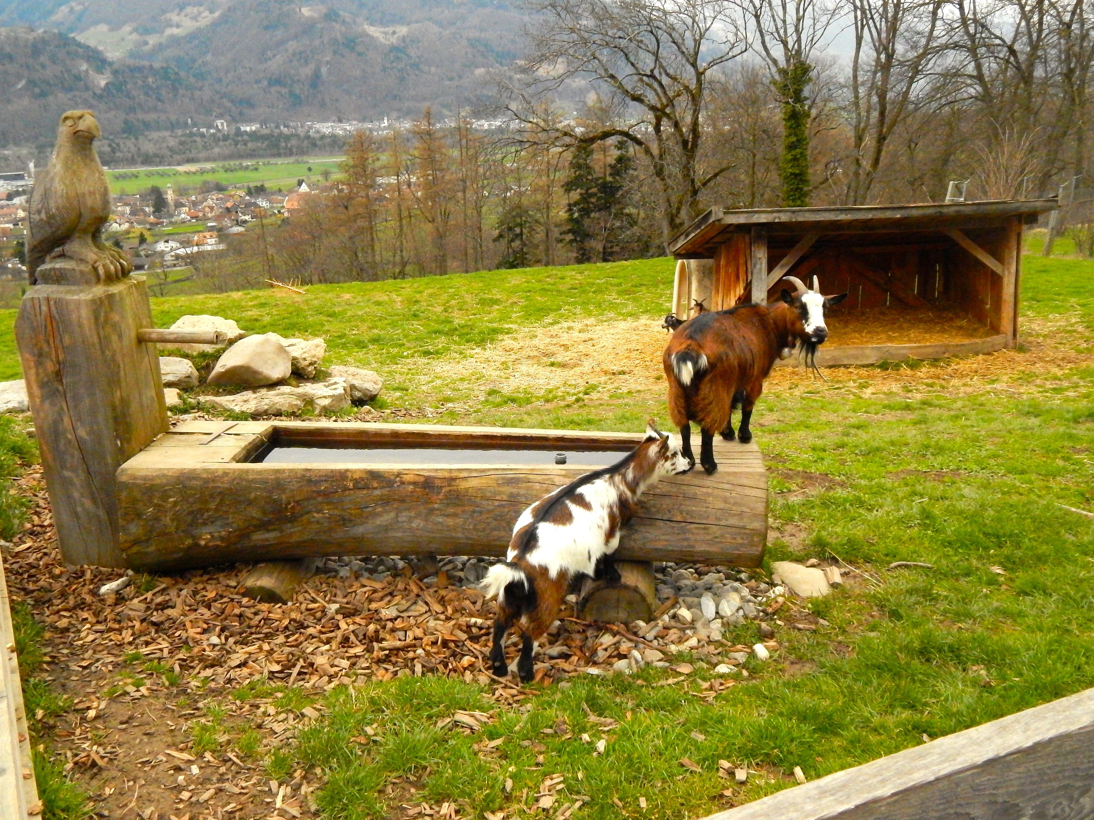 Suiza, Heidiland en Maienfeld. Qué visitar en Suiza?