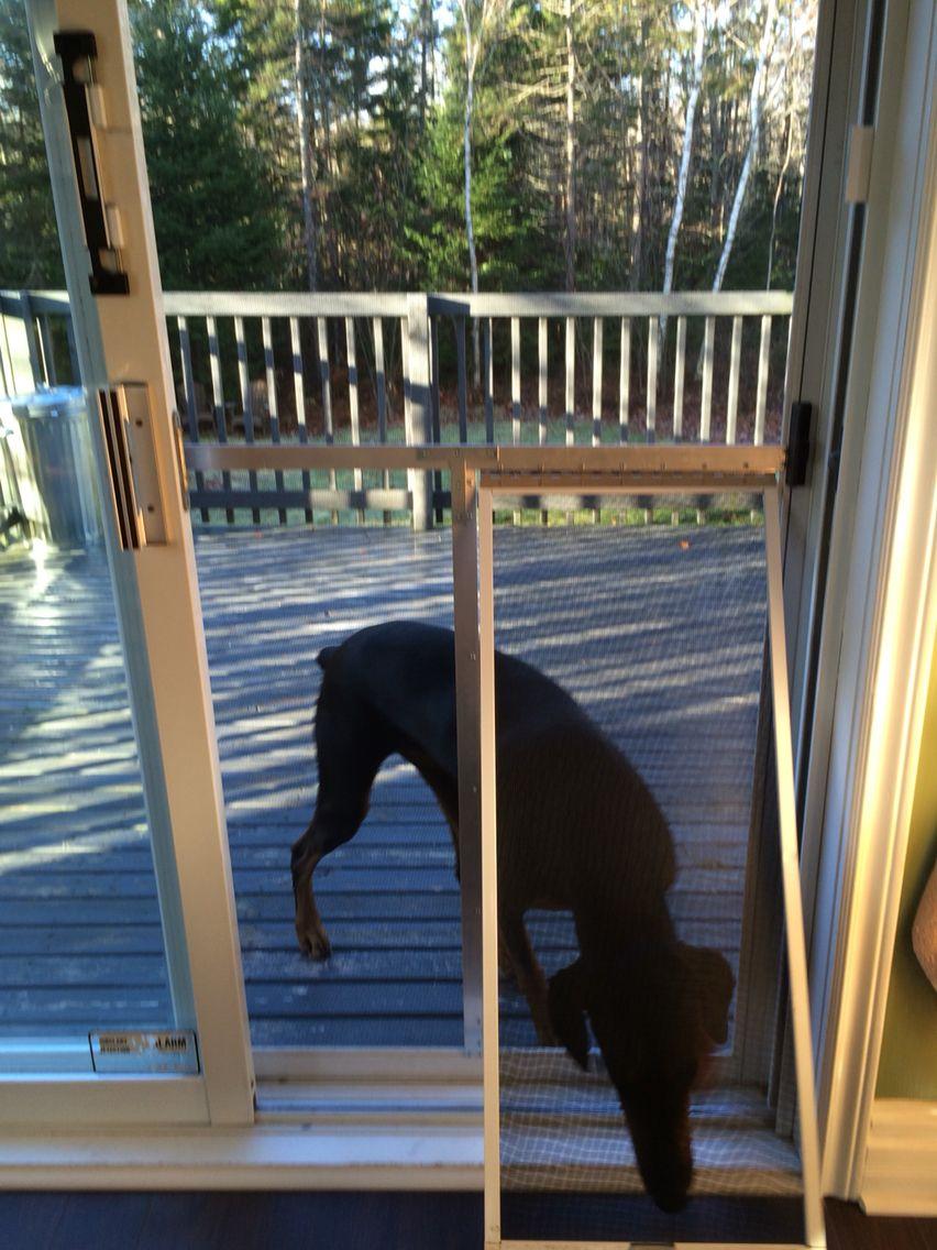 diy doggie door dog screen door