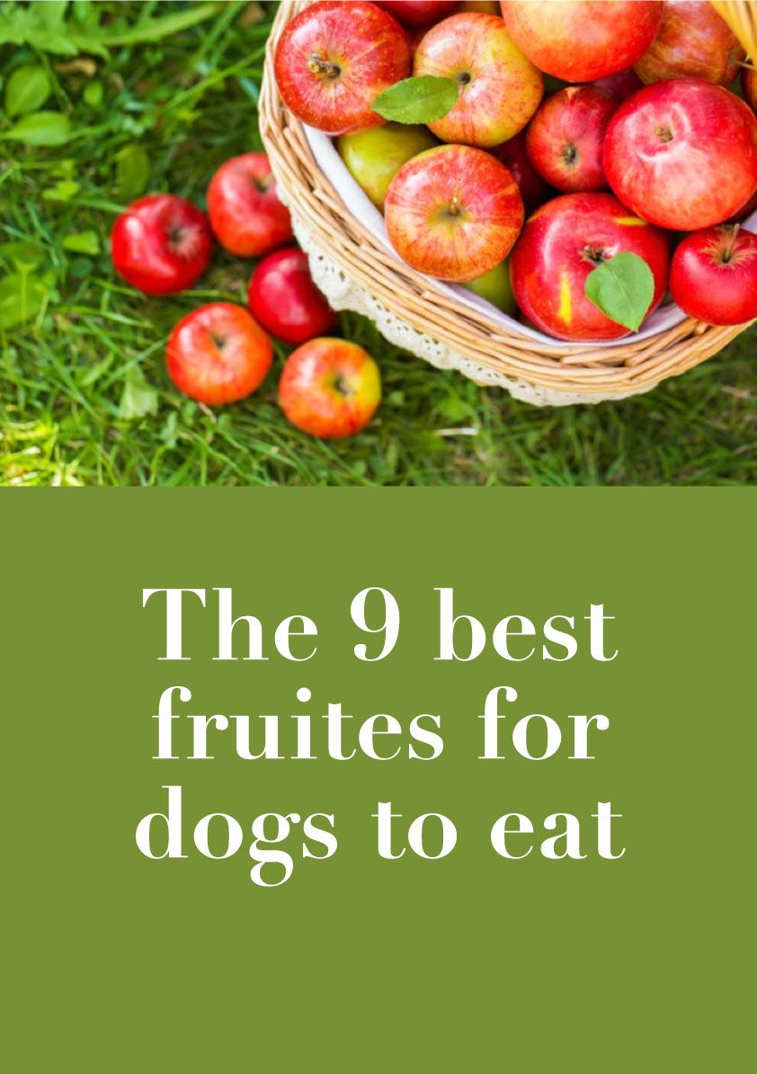 We rounded up the best fruits for dogs to eat, my dog's