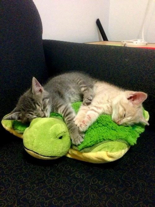 Magicalnaturetour Sleeping Kittens Via Reddit Sweet Dreams