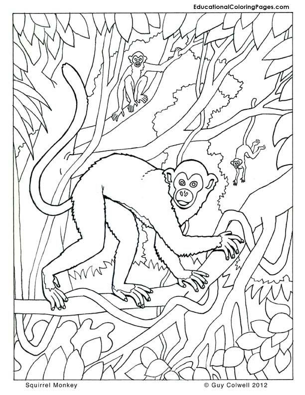 monkey coloring pages | animal coloring books | pinterest | monkey ... - Coloring Pages Monkeys Trees