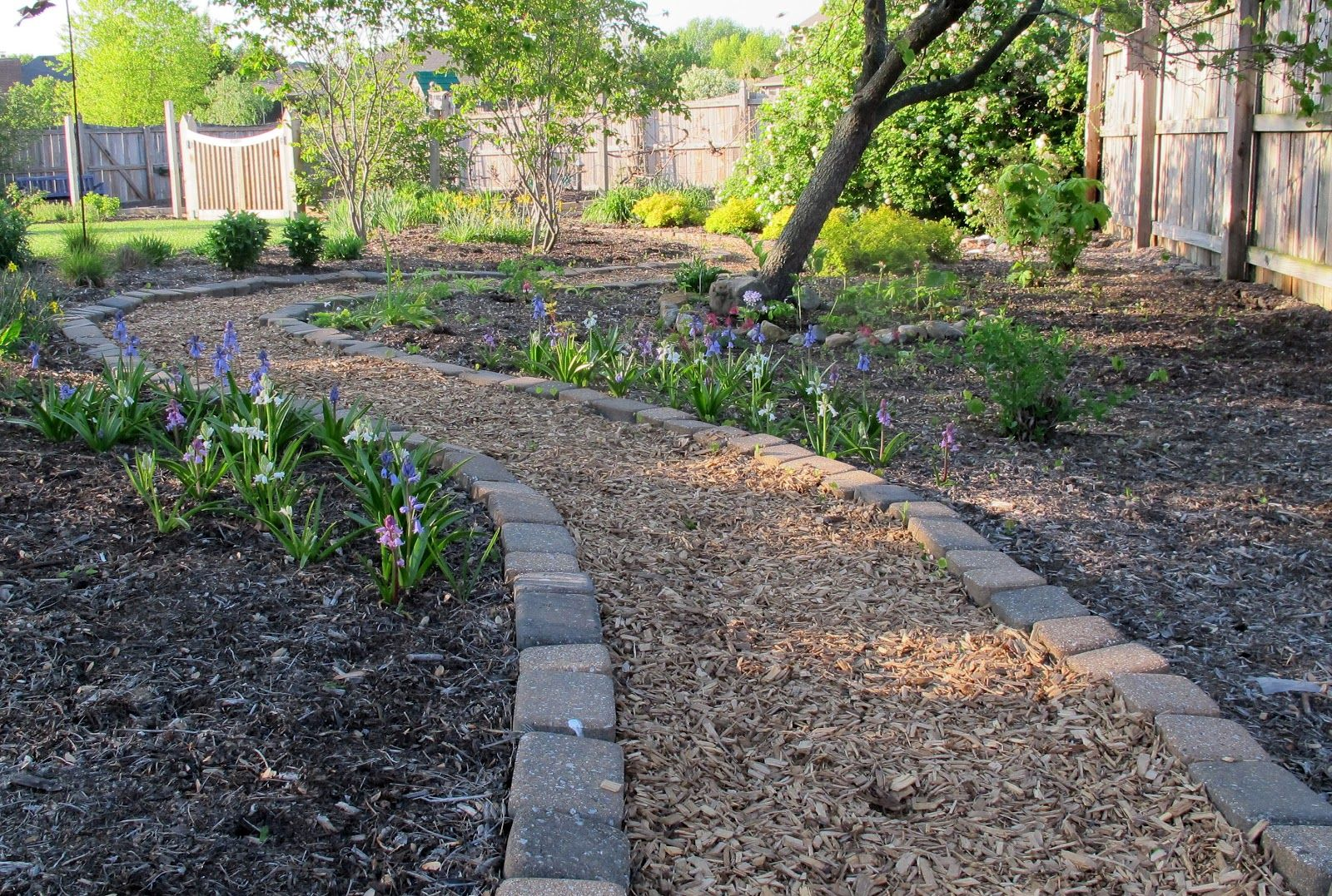 Merveilleux Cedar Mulch Path Kept Tidy With A Border Of Pavers. Nice!