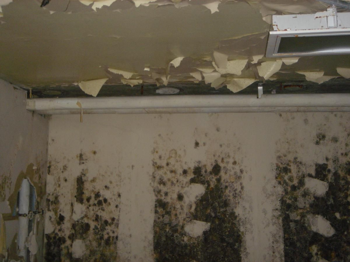 Mold/Mildew BuildUp Molding, Mold remover, Mold remediation