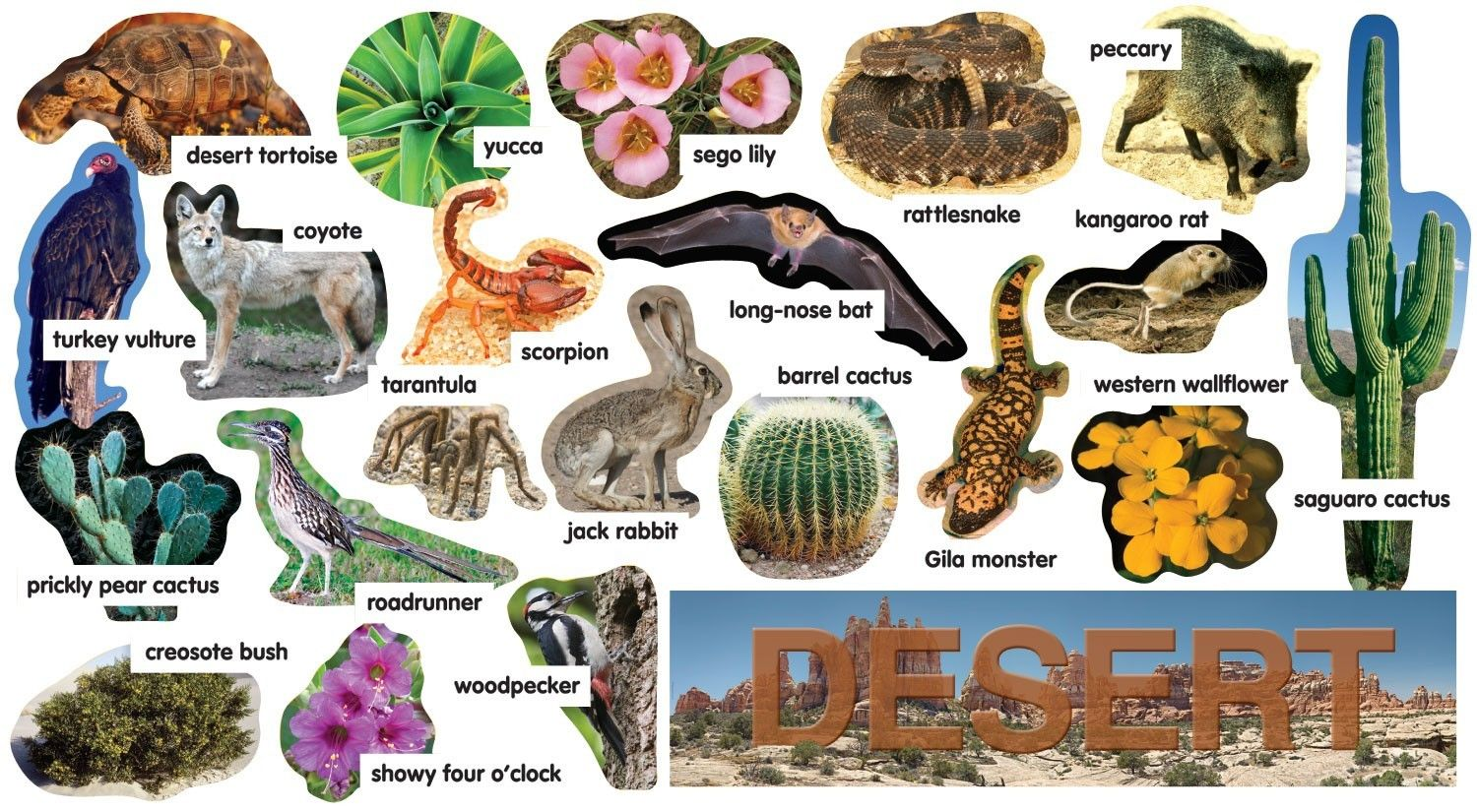 desertplantsanimals.jpg (1500×825) Desert animals and