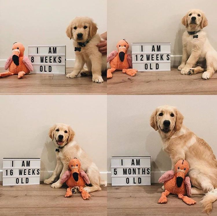 Pin By Melissa Hayes On Pet Stuff Super Cute Dogs Puppy Announcement Puppy Shower