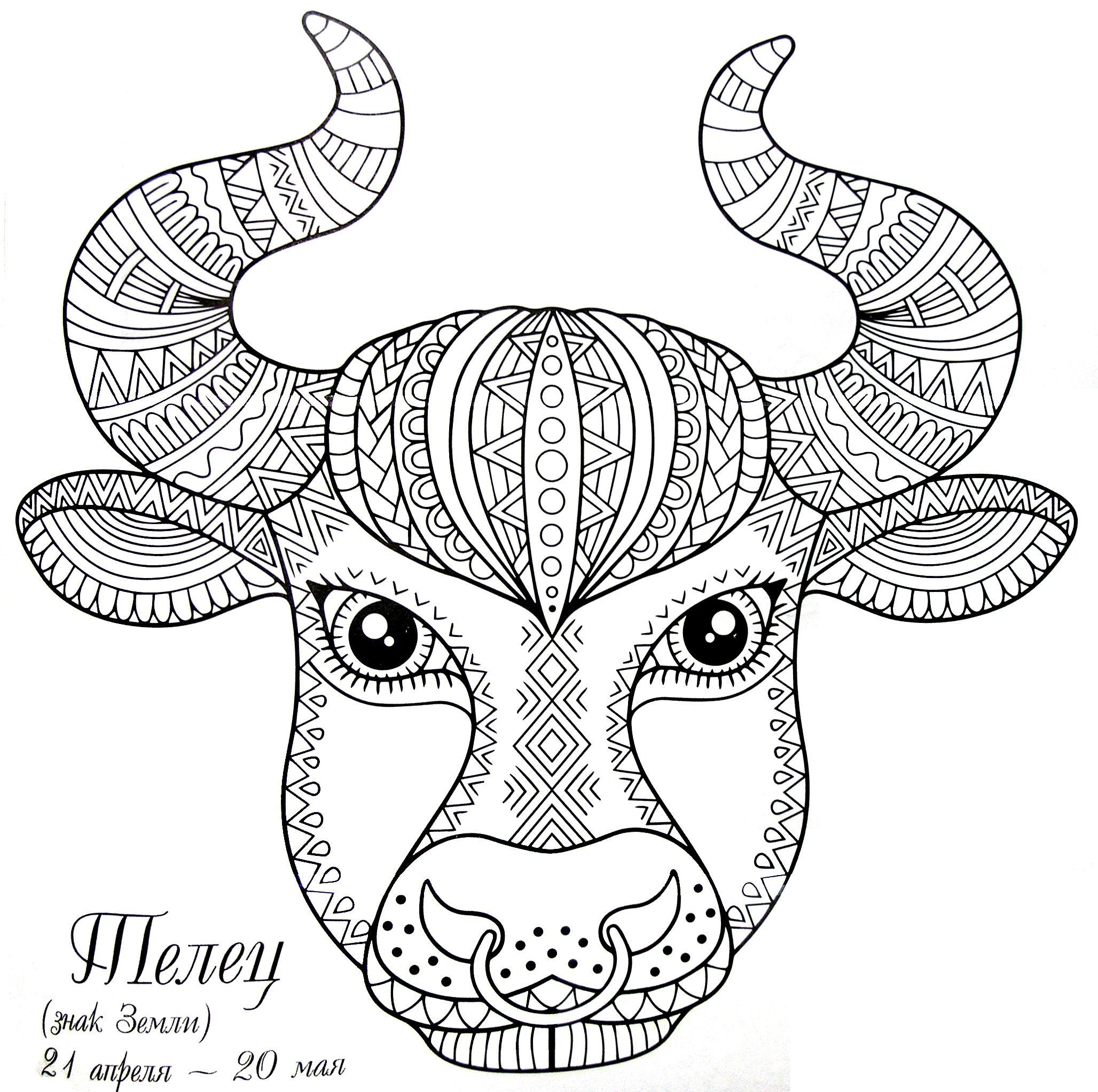 бык-1.jpg (2056×2044) | Книжка-раскраска, Раскраски, Рисунки