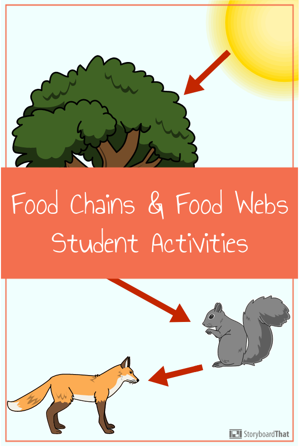 Food Chains and Webs in 2020 (With images) Food chain