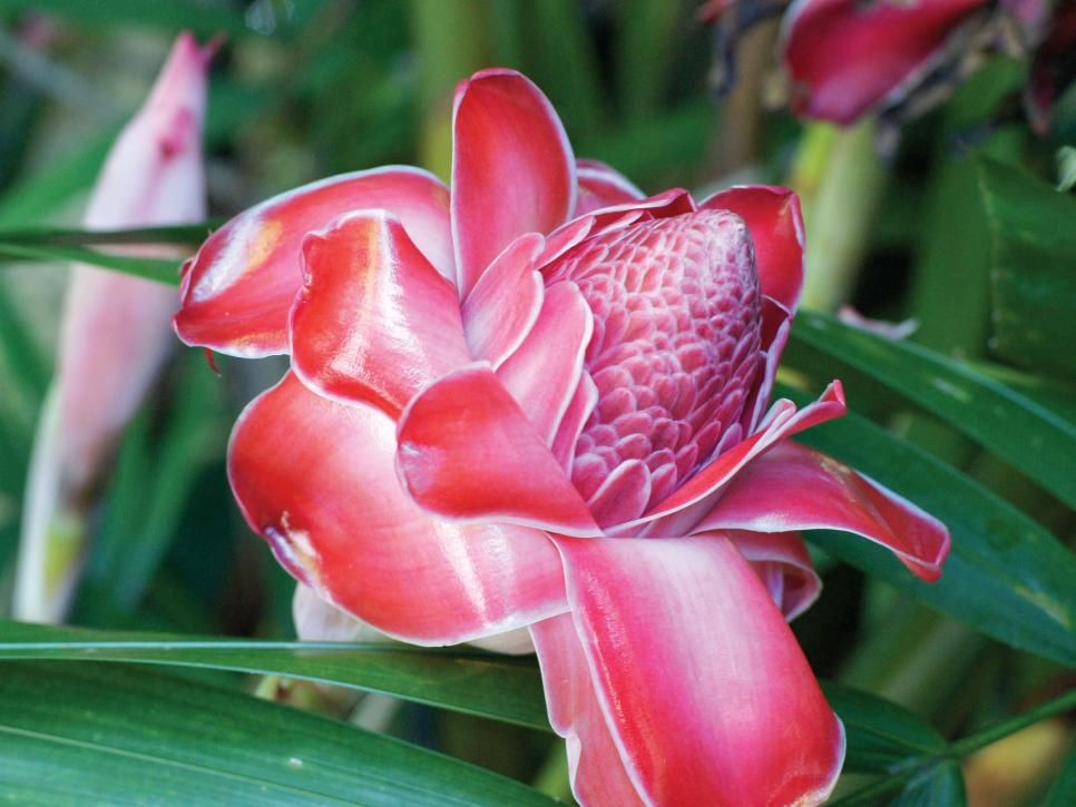 Survey some of this exotic garden's spectacular tropical plants and flowers.