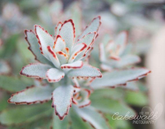 Botanical Flower Photography Print - Succulent Washington D.C. Botanical Garden