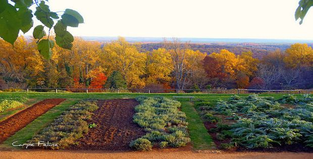 Savvy Housekeeping » Thomas Jefferson's Garden  |Thomas Jefferson Garden Seeds