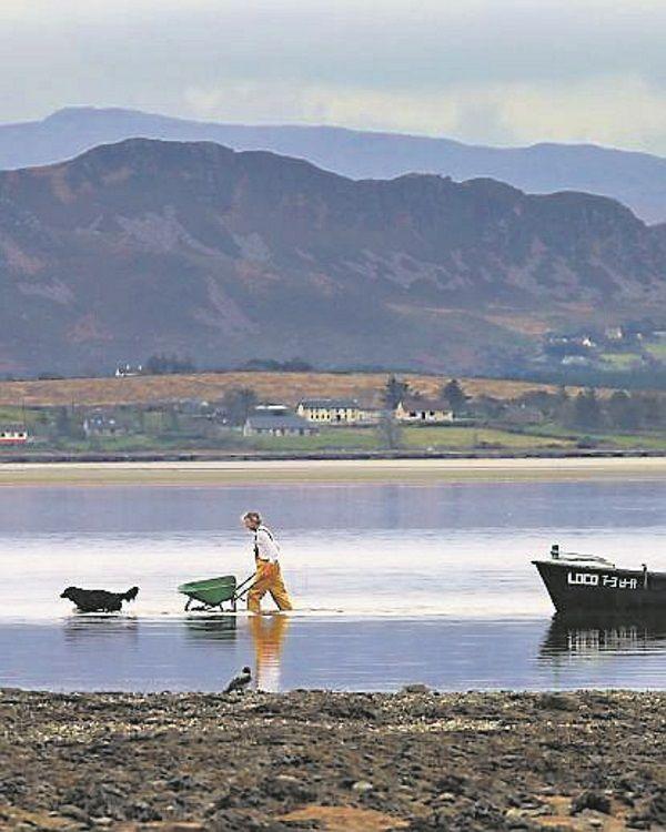 Seaweed: A nutritious foodstuff that needs protecting | Irish Examiner