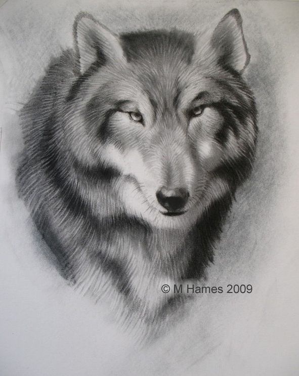How to draw a realistic wolf in graphite drawing people wolf drawing people step by step wolf drawing how to draw a wolf ccuart Images