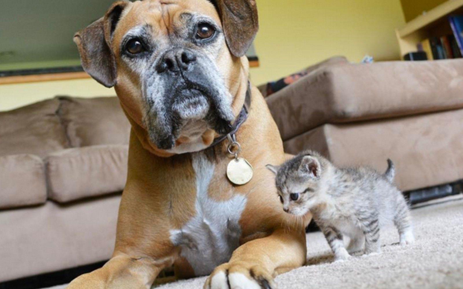 Meet Tina Merlot The World S Most Adorable Foster Kitten Who Has Her Own Guard Dog Photos Foster Kittens Guard Dogs Kitten