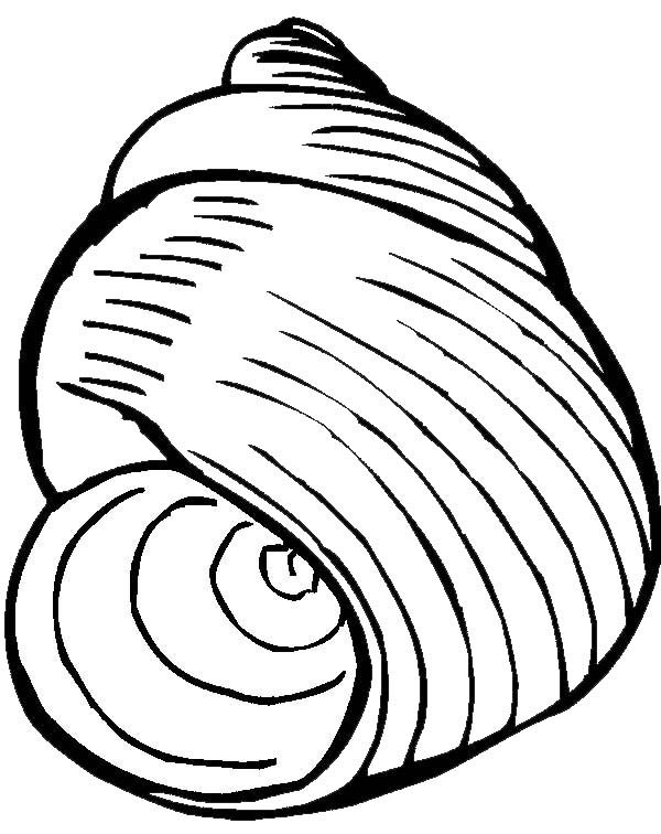 An Exquisite Moon Snail Seashell Coloring Page Online Coloring